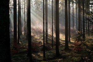 11596539-sunbeams-pour-thrugh-the-naked-trees-on-a-misty-november-morning